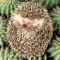 hedgehog1's picture